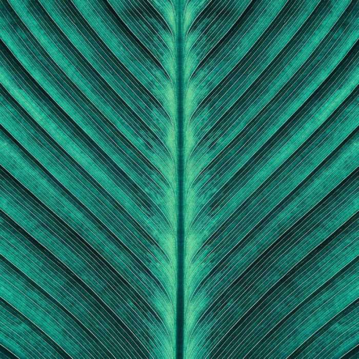 tropical-palm-leaf-texture-picture-id903532536